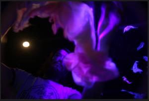 Screen Shot 2015-03-19 at 7.22.15 PM